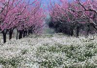 04_primavera_big2.jpg